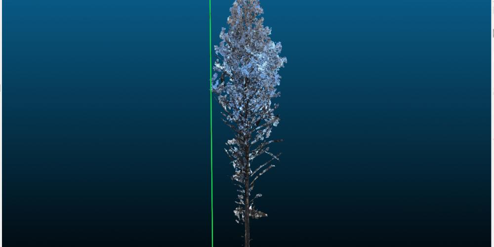 Planting a virtual tree at EUBioScene19