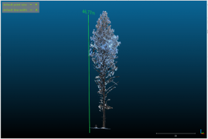 Planting a Virtual Tree at EUBioScene19​